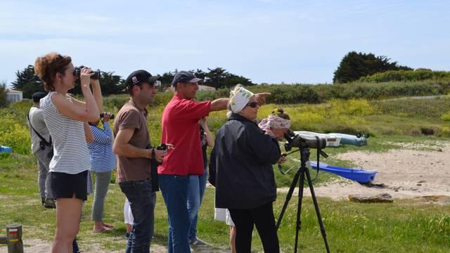 Vogelbeobachtungsausflug, eine Kulturerbe-Führung auf der Ile d'Yeu © OT Ile d'Yeu