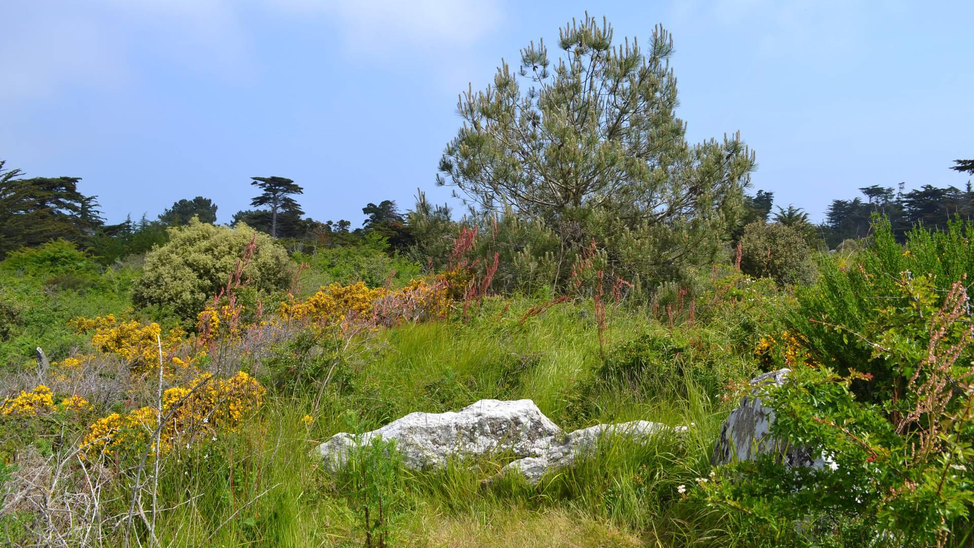"""""""Trémureau des Landes"""", Megalith, Ile d'Yeu"""